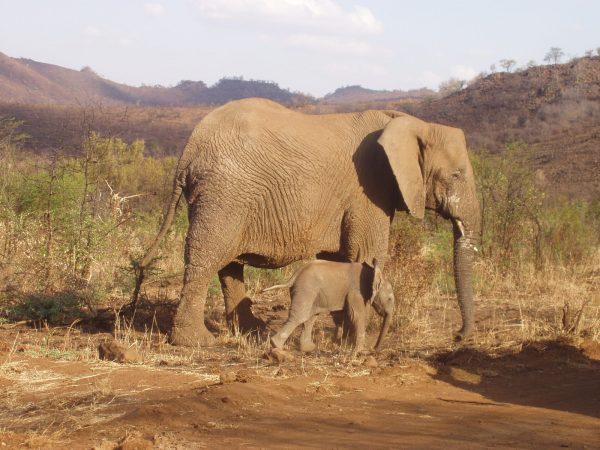 Technologieën om bedreigde diersoorten te redden